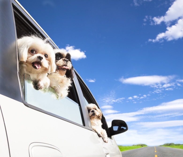 J&M Pet Transport Services